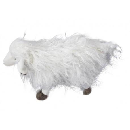 Ovce Tibet stojící bílá